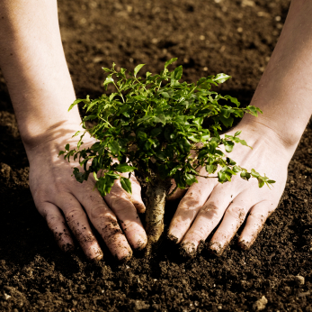 4 Simple Tips for Planting a Tree
