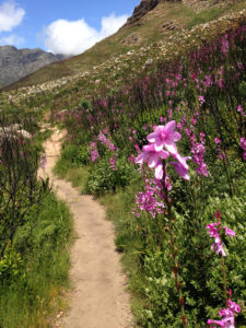 4 Ways to Make Your Own Trail