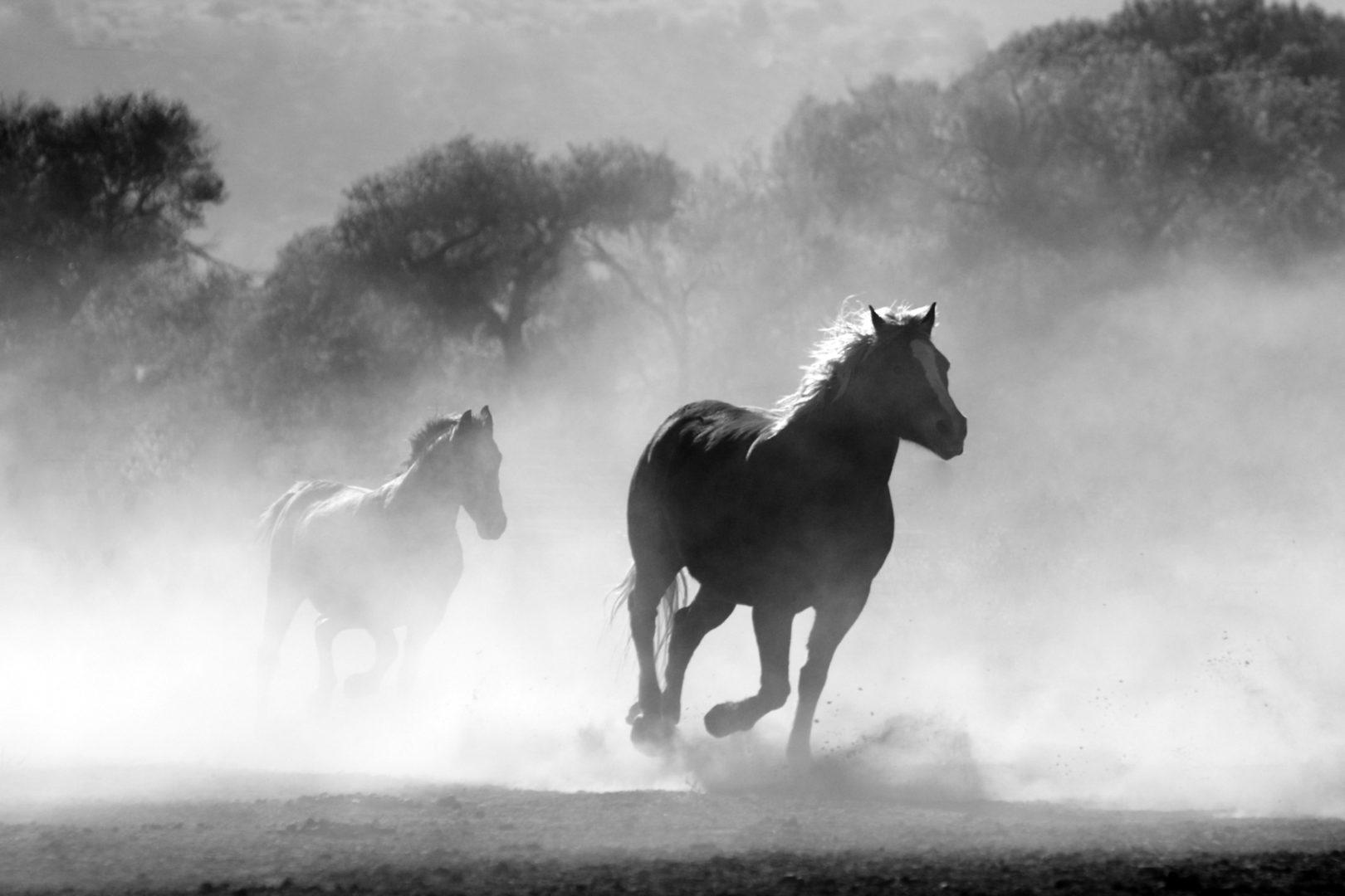 busy horses running wild