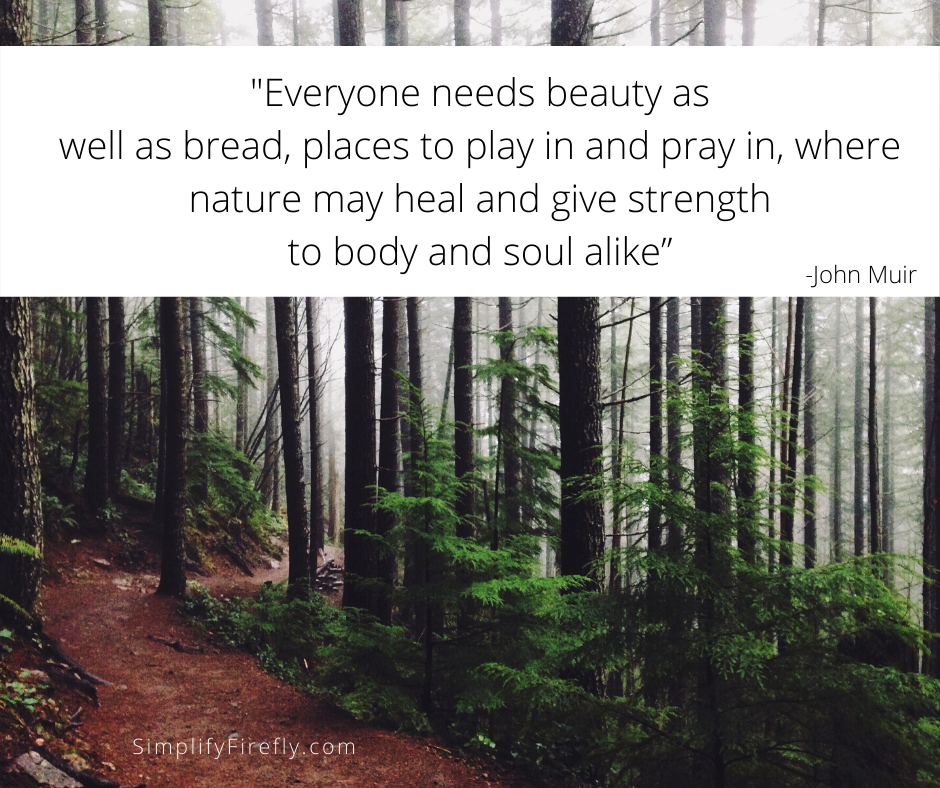 John Muir quote in trees