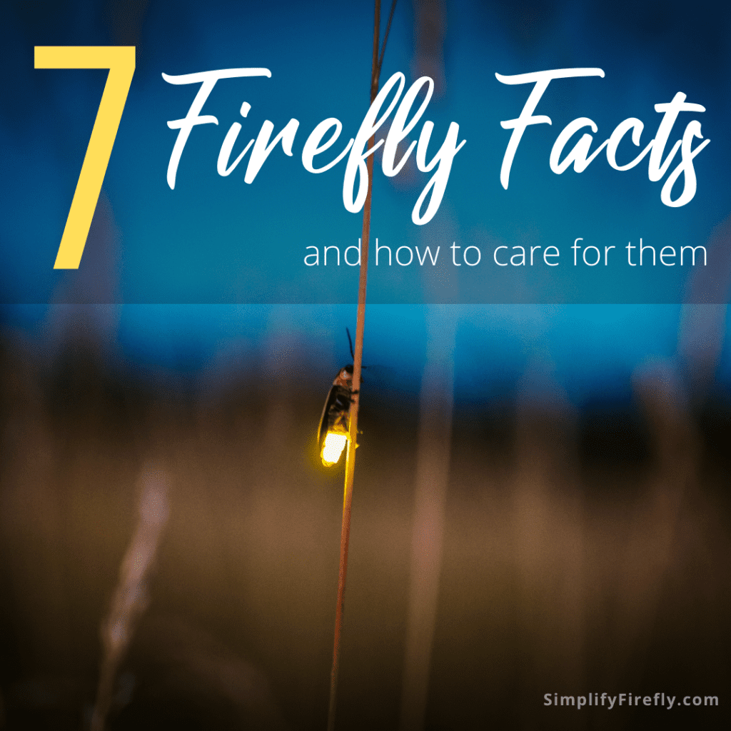 firefly facts
