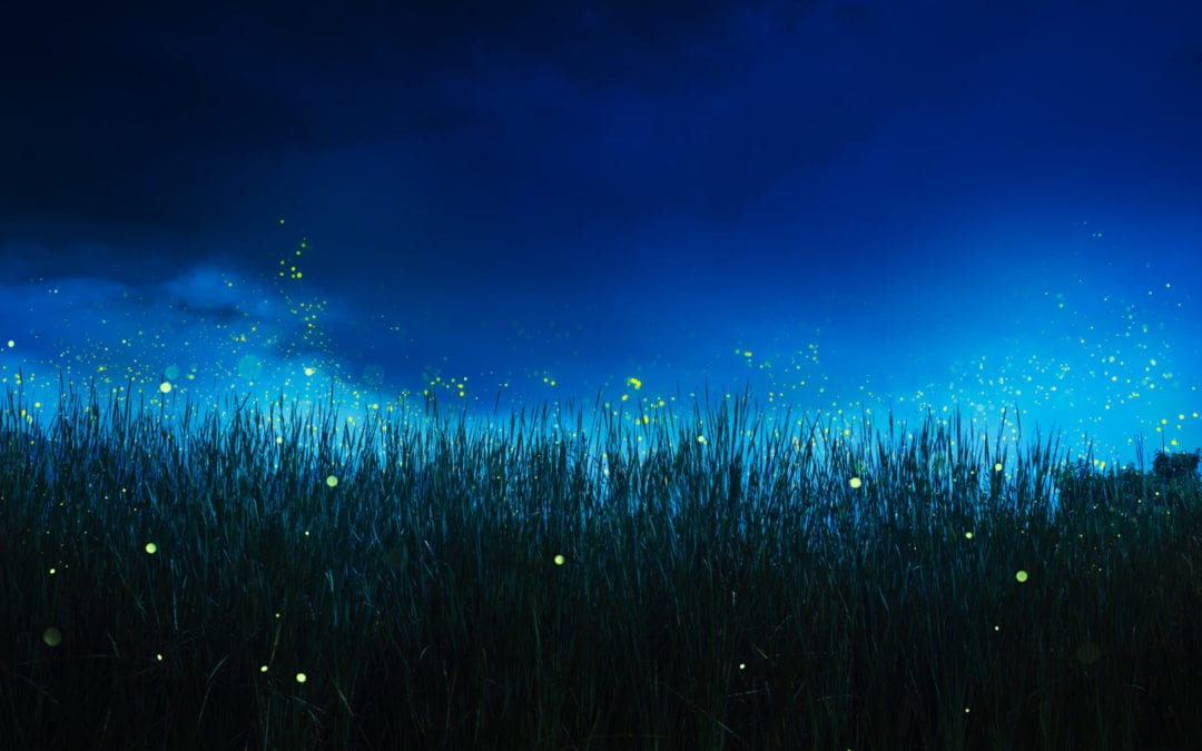 7 Firefly Facts & How to Care for Fireflies