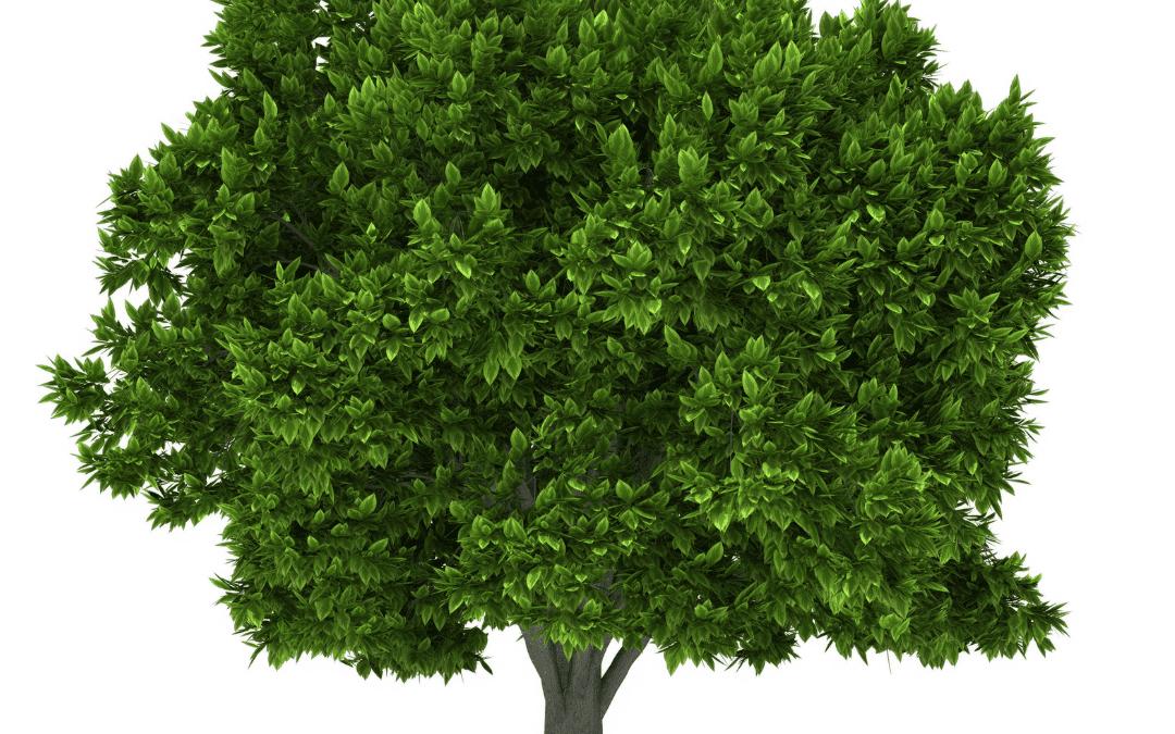 Tree Facts, Terms, & Fun: Plus 4 Tips